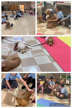 Sprout day fundraiser. Comfort retrievers and yoga.
