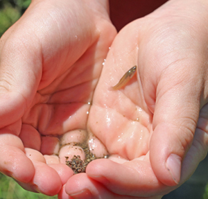 One boy found a minnow while exploring the stream near Millcreek Elementary.